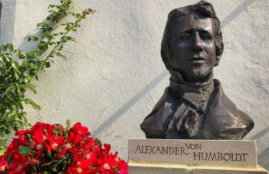 Humboldt-Rose vor Büste